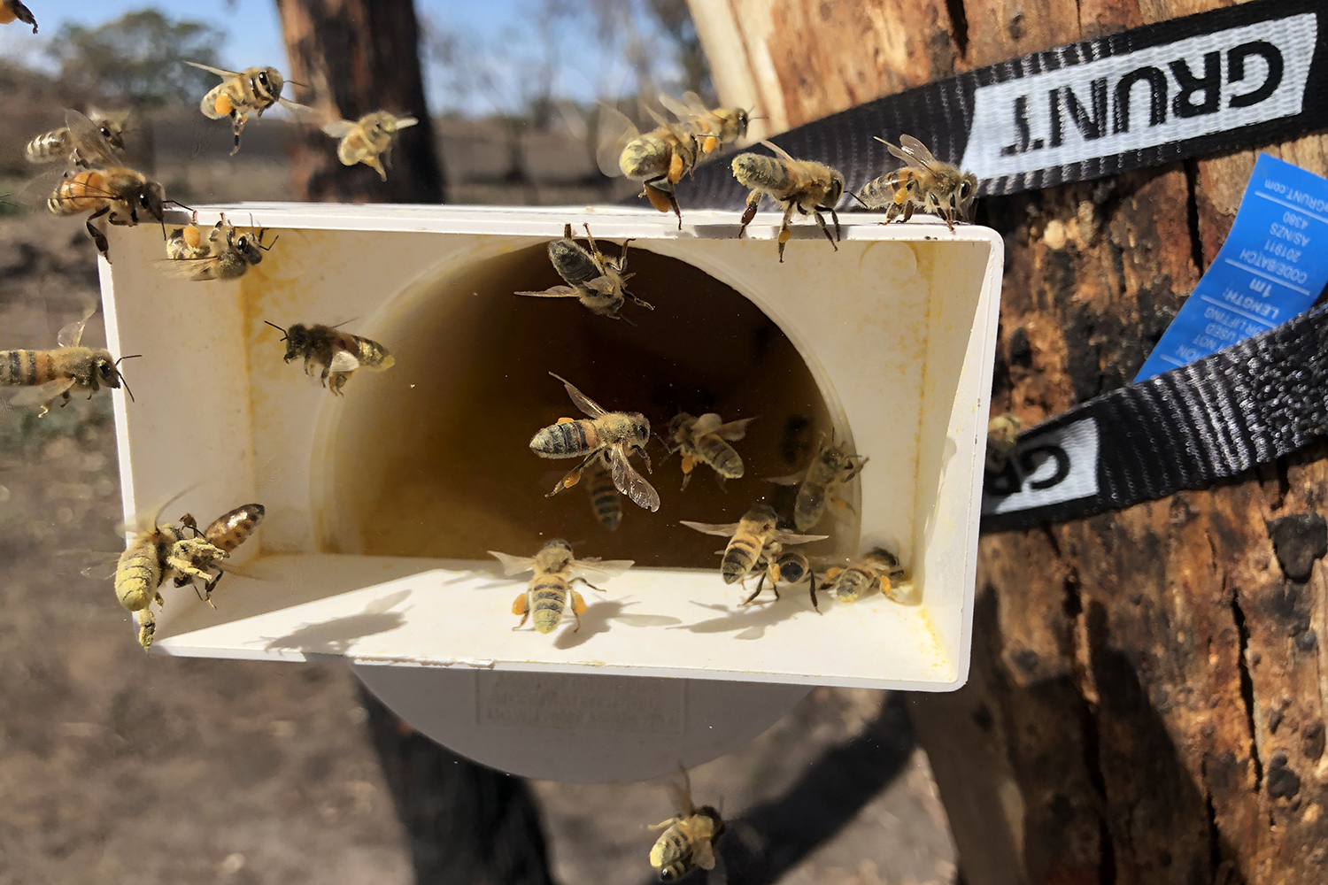 Read more about the article Honey Bee Nutrition – Early Detection of Malnutrition and Colony Collapse