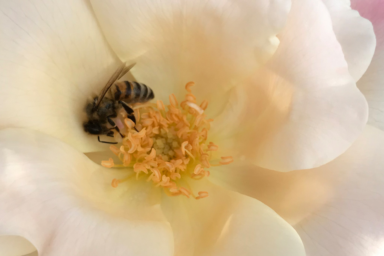 Read more about the article World Bee Day Event: Mount Pleasant Farmers' Market